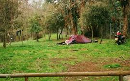 Sevilla_camping-Camping-El-Martinete.jpg
