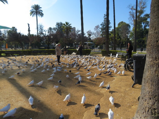 Sevilla_parque-maria-luisa-duiven