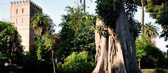 Sevilla_tuinen-jardines-murillo-sevilla-g.jpg