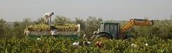 De mosto wijnroute in El Aljarafe